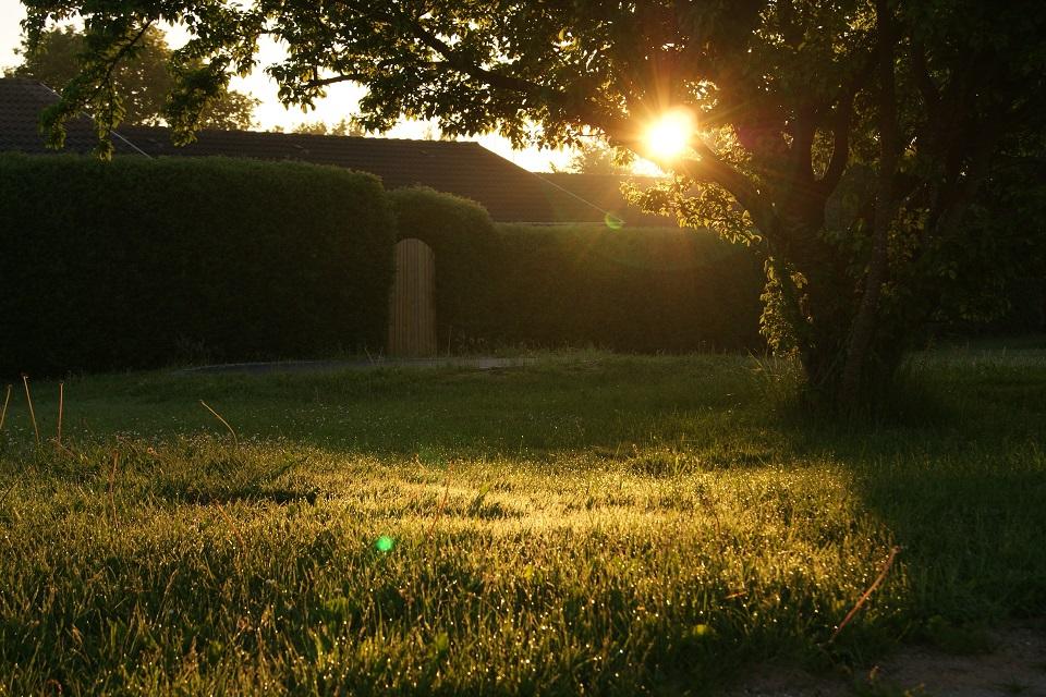 How Can You Convert Your Backyard Into A Wildlife Garden?